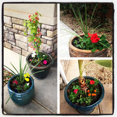 Potting Flowers Tips & Suggestions