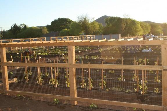 IMG 2198 575x383 Gardening Basics   Soil Prep