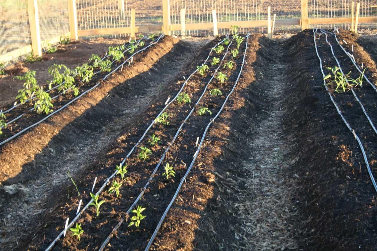 Gardening basics soil prep for Mineral soil vs organic soil