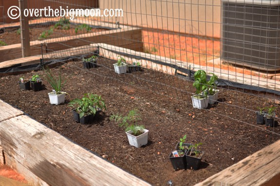 plantingagarden1 Garden Basics   Planting & Pests