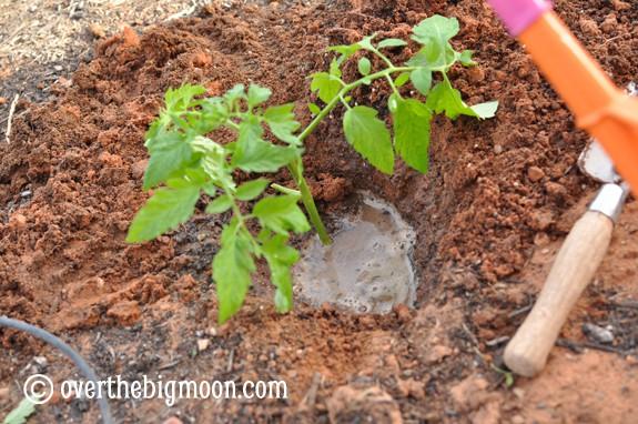 plantingagarden10 Garden Basics   Planting & Pests