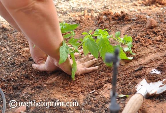 plantingagarden12 Garden Basics   Planting & Pests