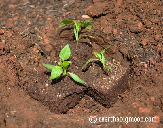 plantingagarden3 Garden Basics   Planting & Pests