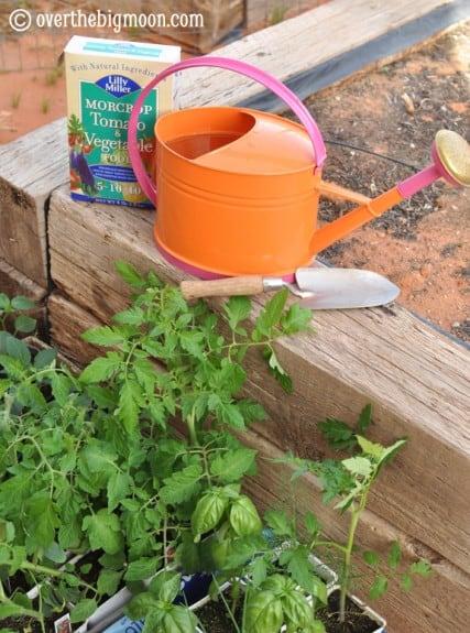 plantingagarden5 427x575 Garden Basics   Planting & Pests