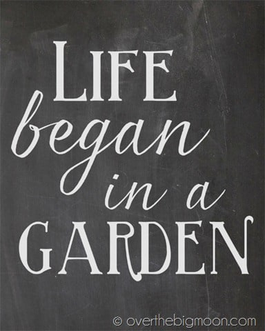 Life began in a garden chalkboard