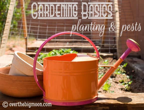 gardening basics planting and pests 575x437 Garden Time!