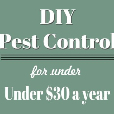 DIY Pest Control for Under $30 a Year
