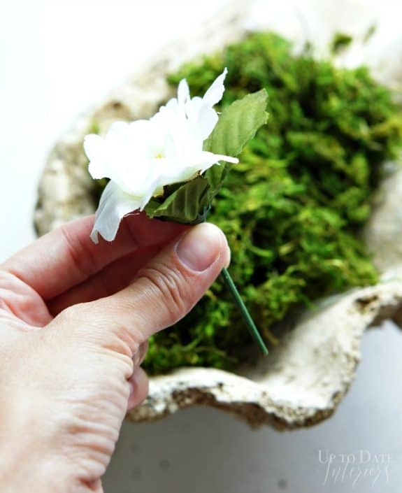 sea-shell-moss-flower-step